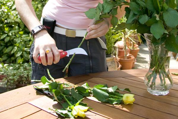 подрезать живые цветы